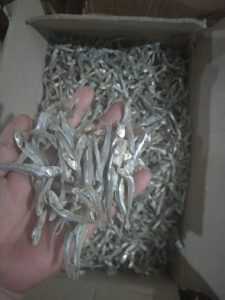 cá cơm ruồi khô mua ở đâu
